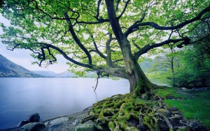 beautiful-tree-and-river[1]